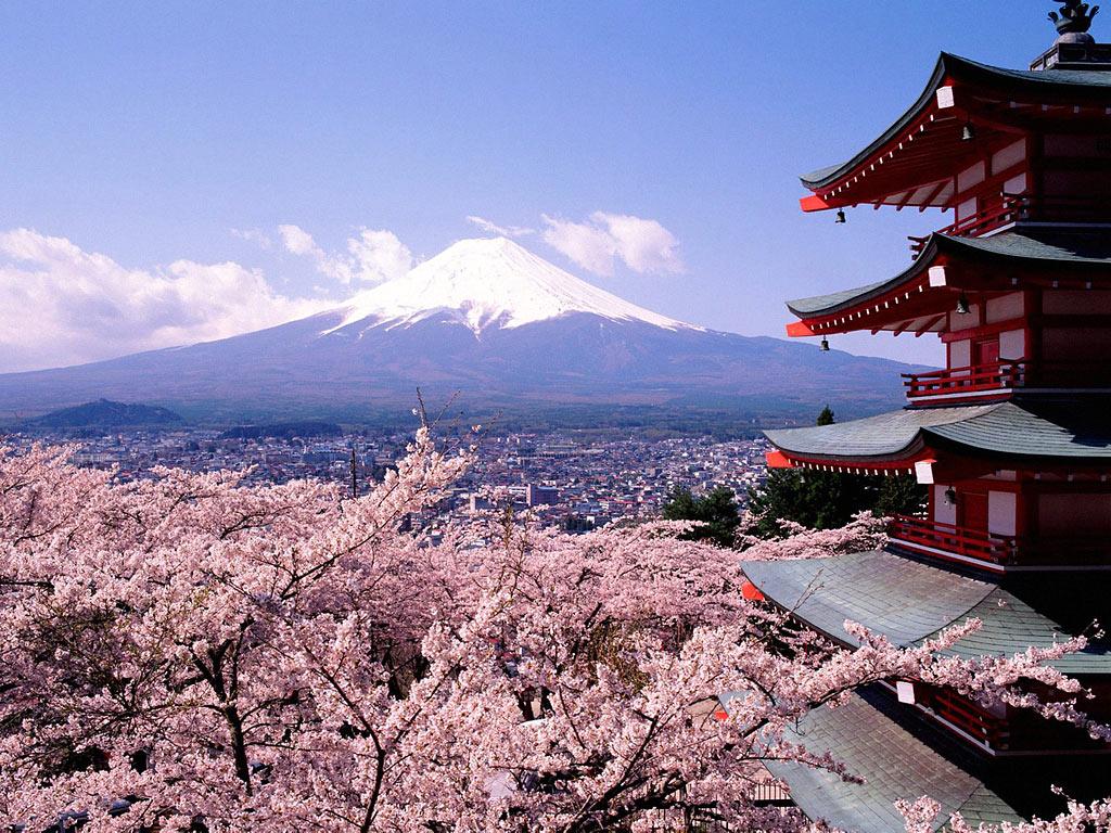 Цветущая сакура и гора фудзи