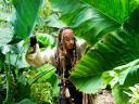 Джек Воробей в джунглях