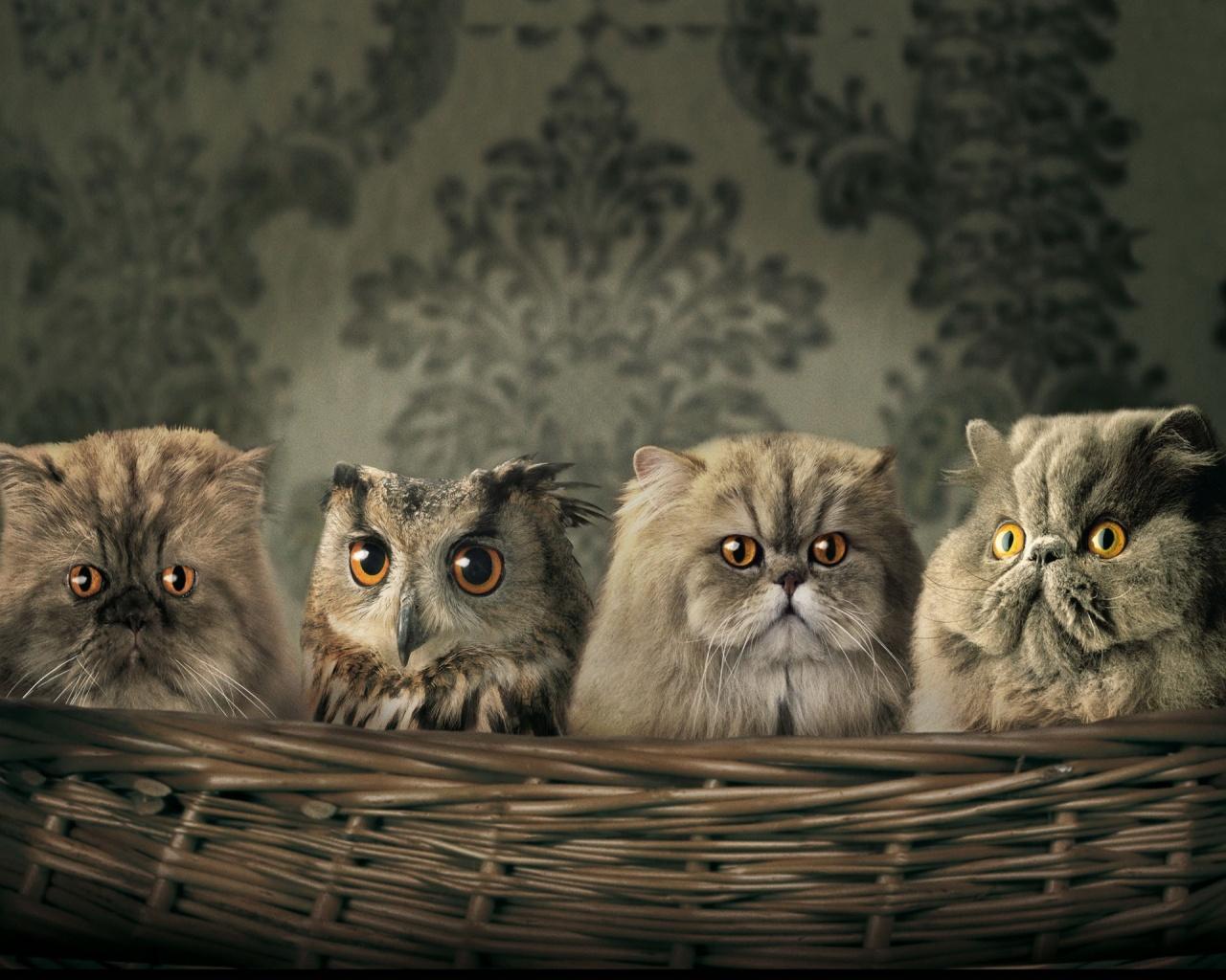 Картинки На Рабочий Стол Коты